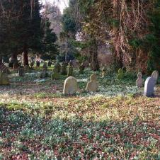 Snowdrops in the Old Cemetery